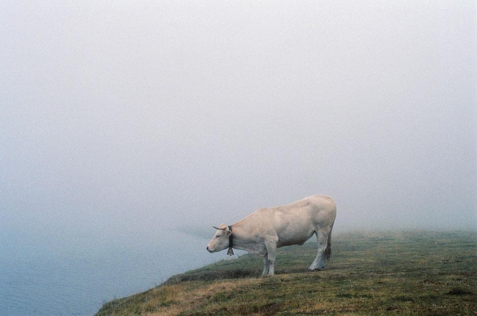 Olle Fischer Kuh